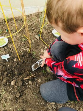 small boy plants a seed in a garden
