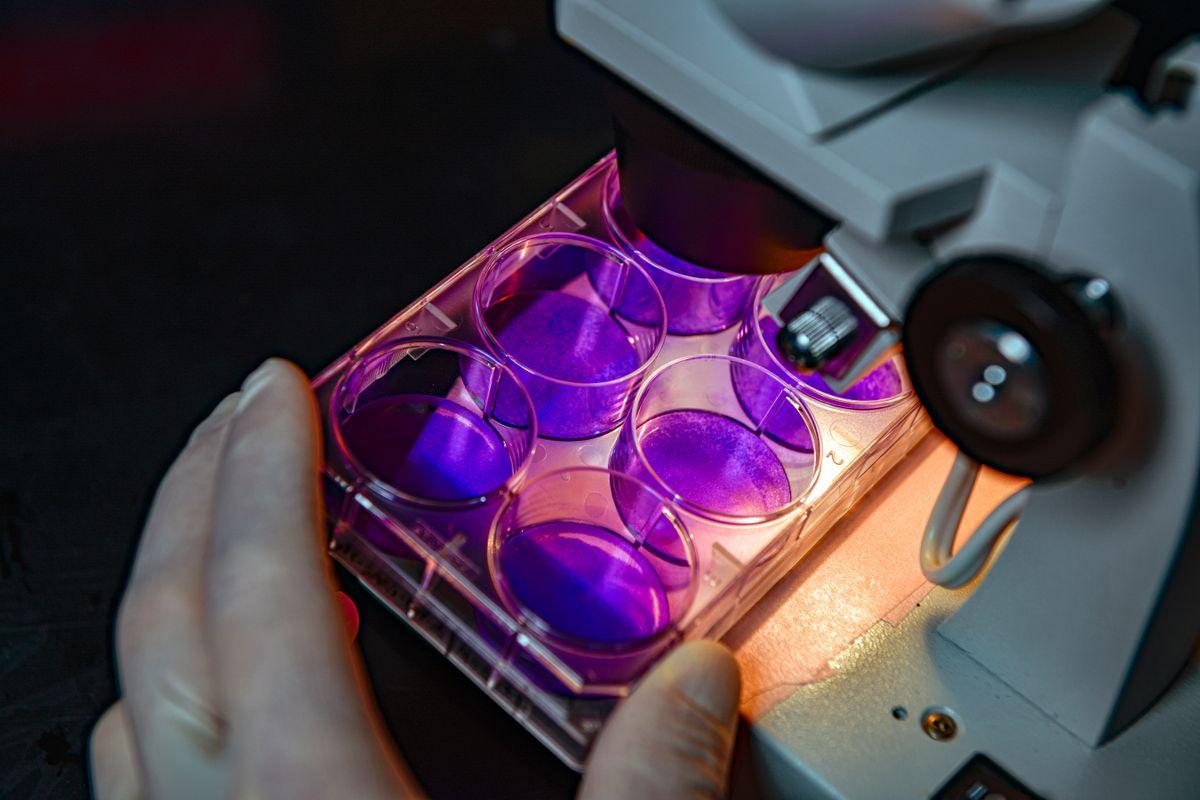purple things in lab setting