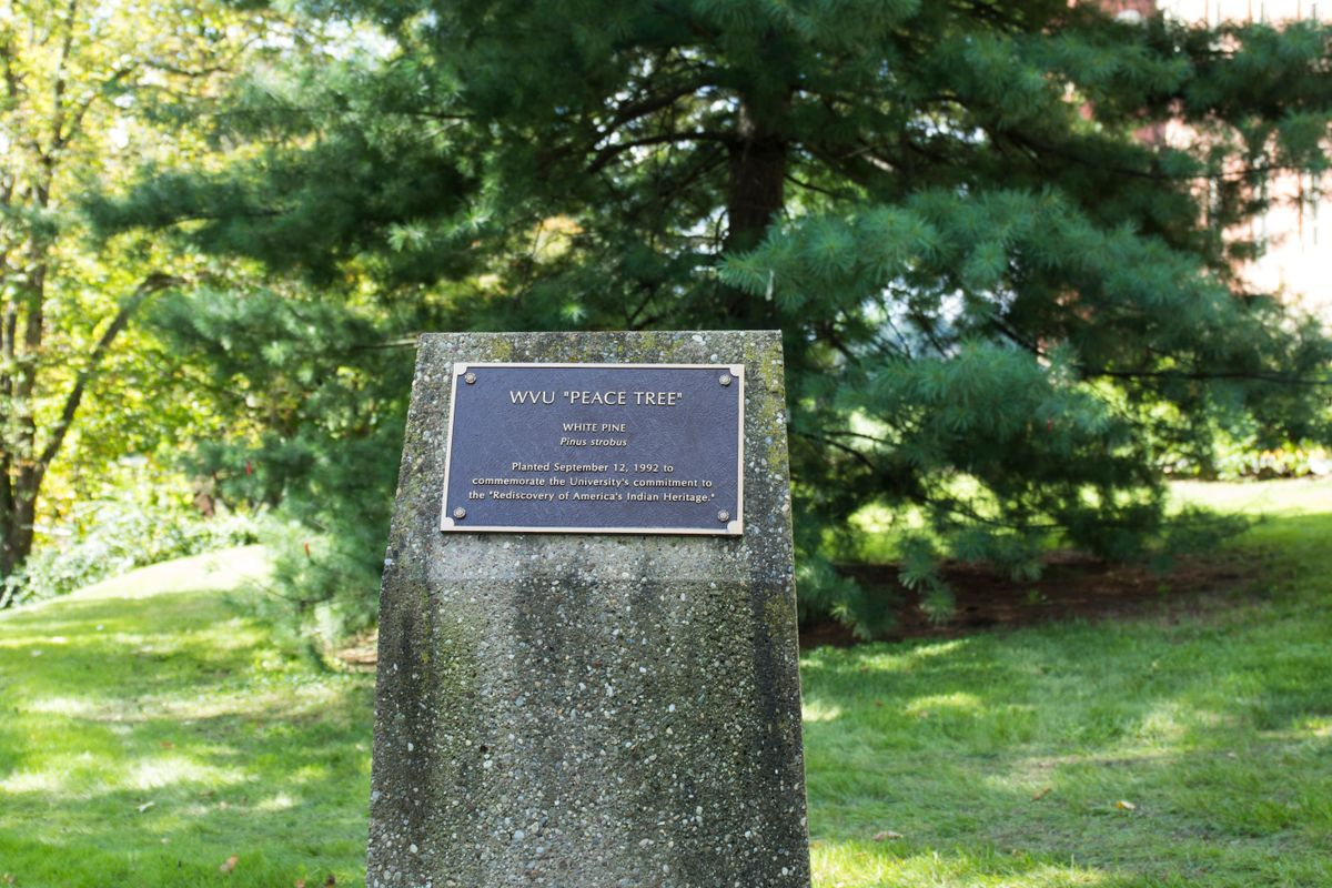 Plaque in front the WVU Peace Tree