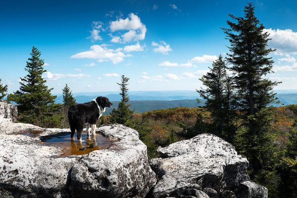 Blue sky, green trees and hills with dog standing on grey rock