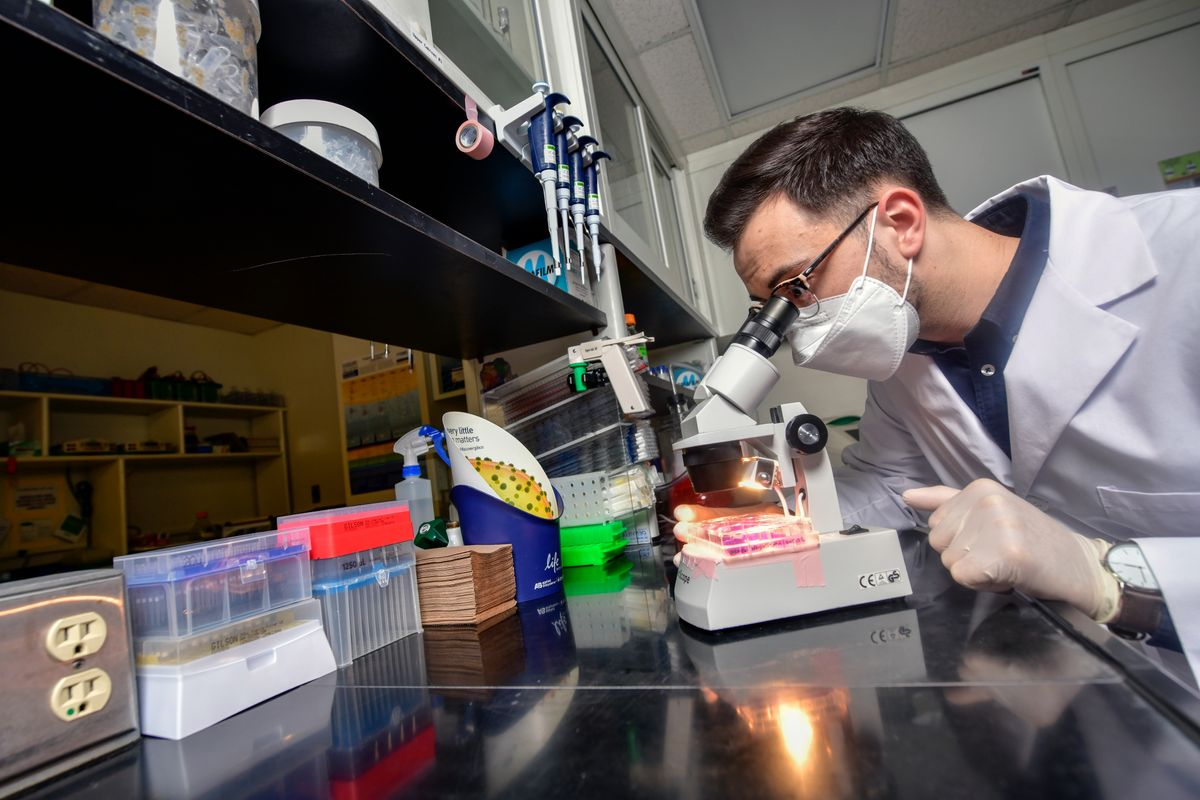 man looks through microscope in lab setting