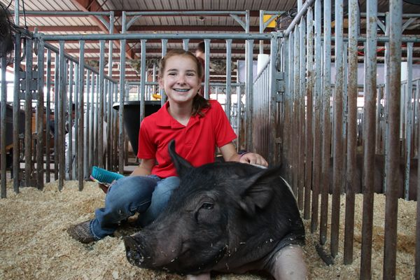 Teenage girl in a red polo shirt kneeling behind a black pig.