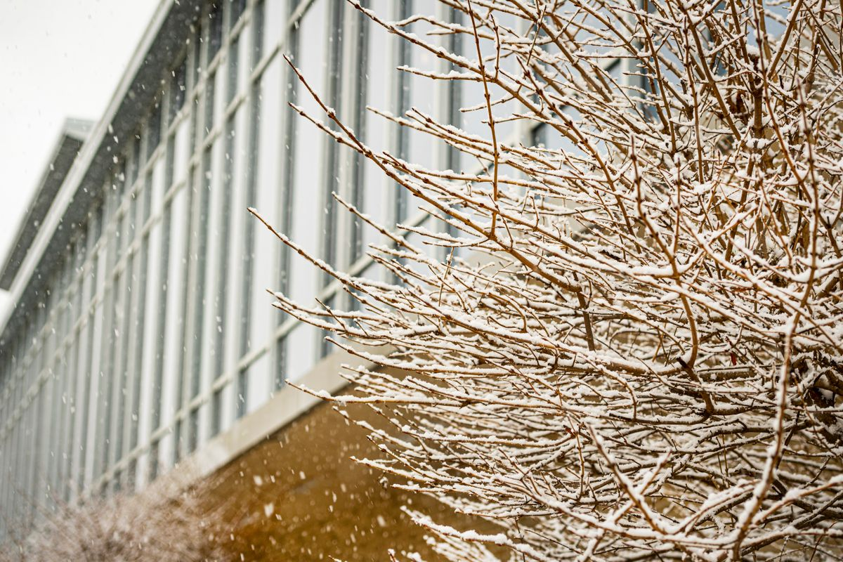 icy tree in front of glass windows