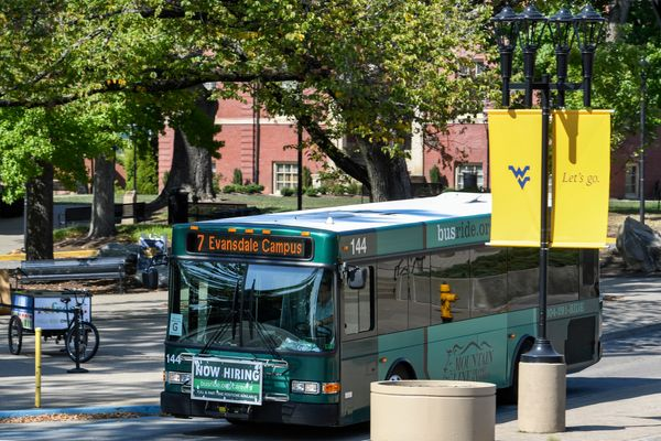 city bus on street, green leaves