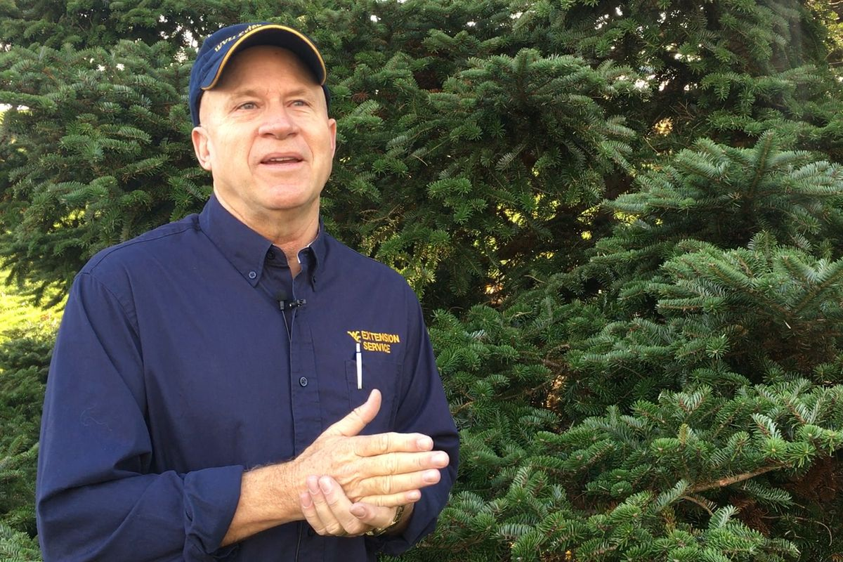 man in hat and blue shirt stands in front of an evergreen tree