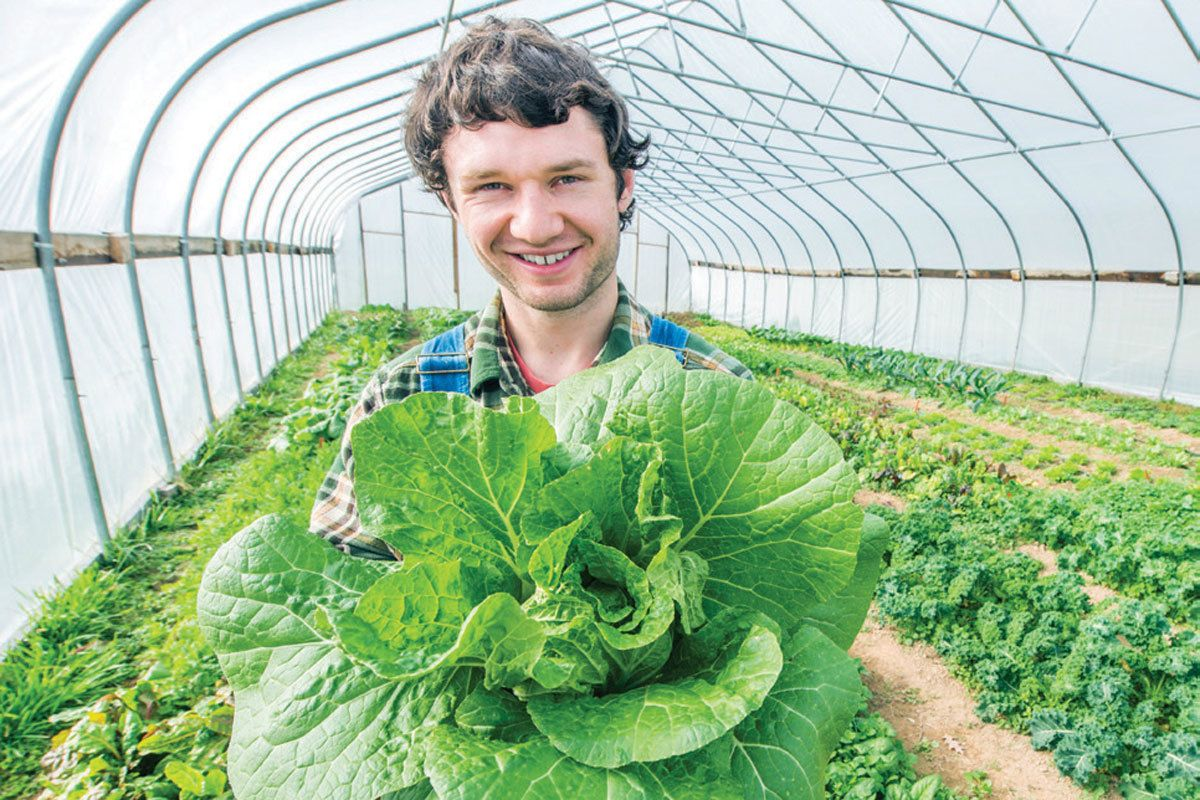 Man with short, curly, brown hair holds up a head of lettuce in a greenhouse.