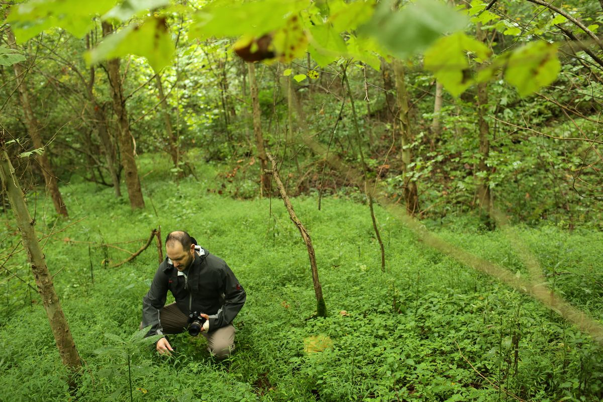 photo of man squatting in the woods in grassy area