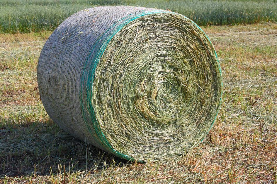 a round hay bale sits in a mowed field