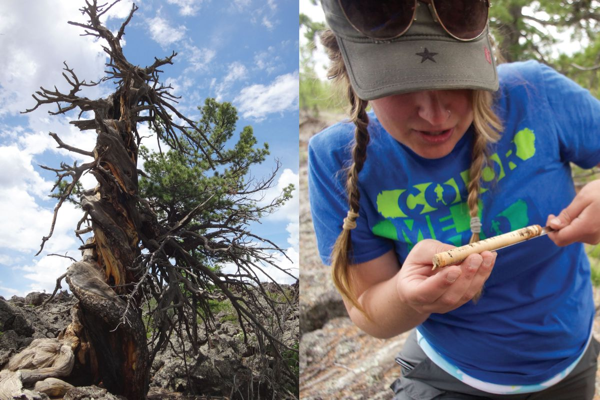 Relative dating dendrochronology and climatology