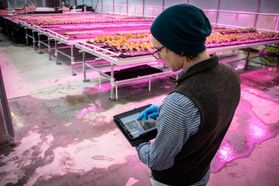 Man works on iPad in a greenhouse.