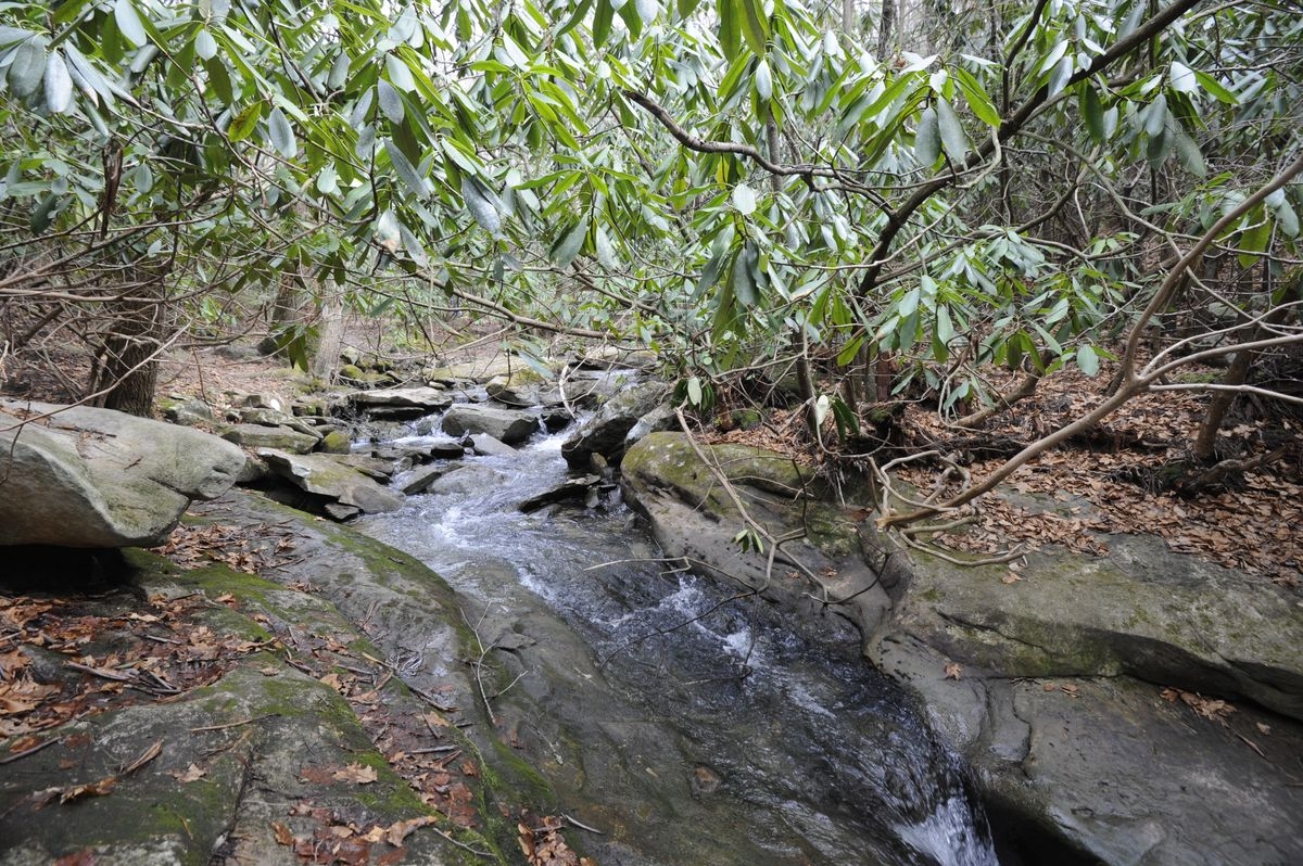 small stream flowing through flat rocks with rhododendron