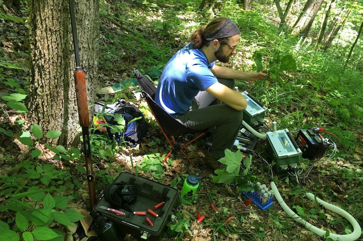 Justin Mathias studies red spruce regrowth in the forest