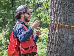 Student measuring circumference of a tree with a tape measure