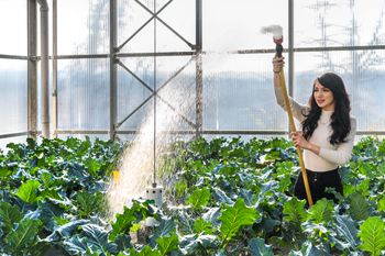 Student watering plants in greenhouse used for research