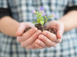 close up of a person holding seedling in two hands