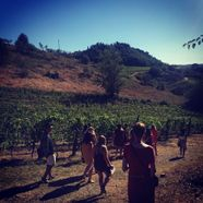 students walk through rows of grapevines in a vineyard