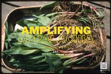image of ramps with overlaid text: Amplifying Appalachia