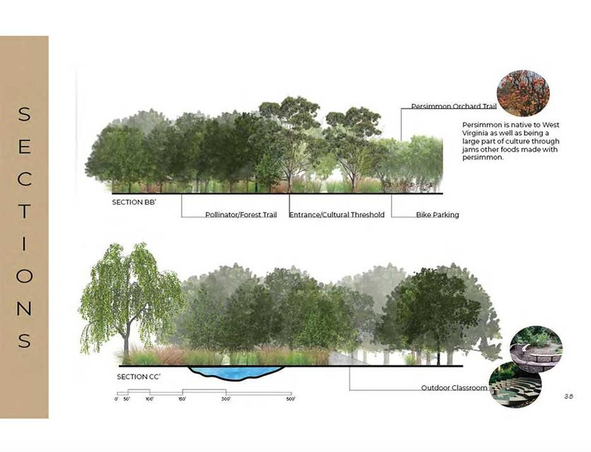 landscape architecture drawing of trees