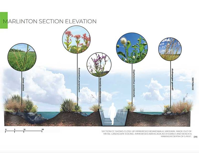 landscape architecture elevation drawing