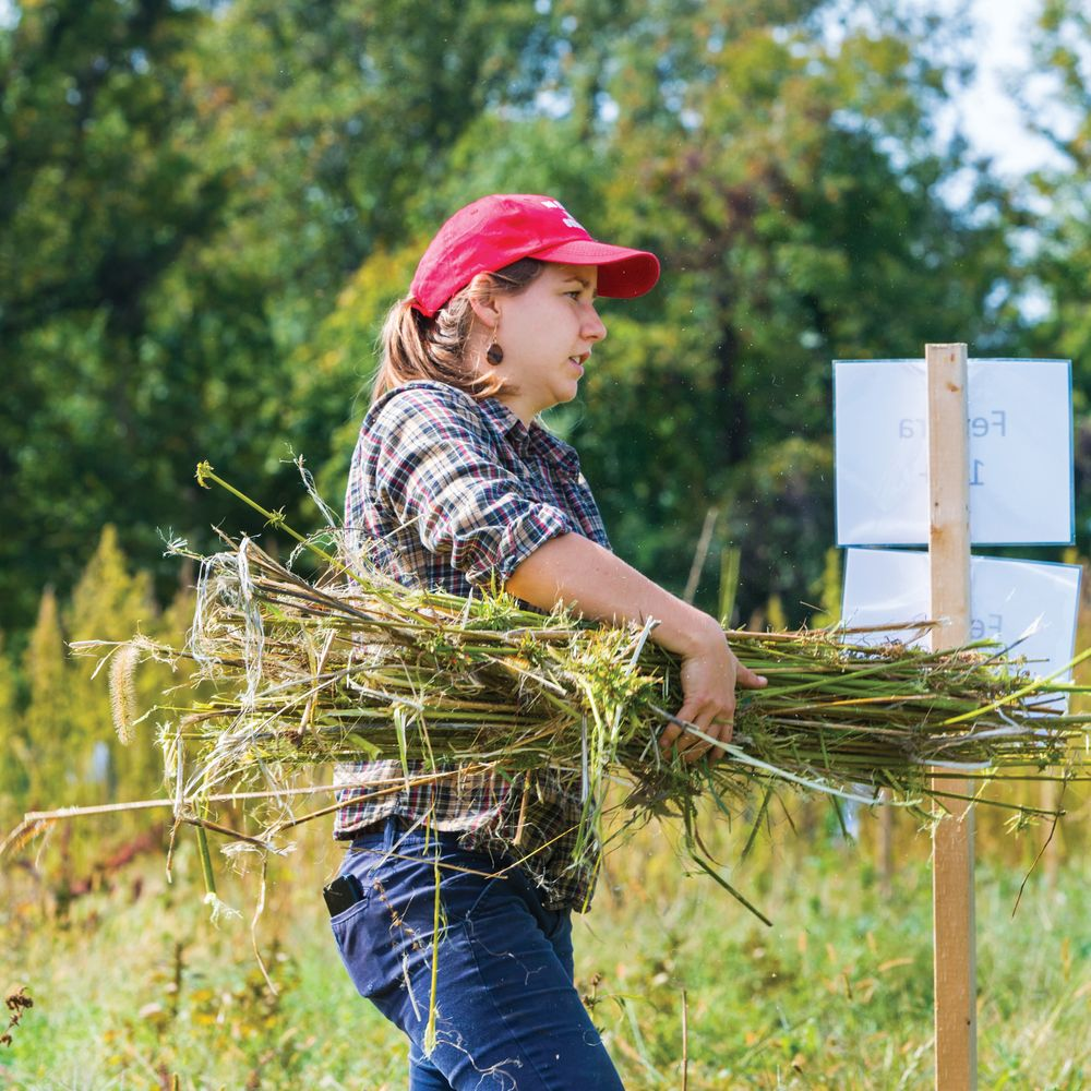 Student gathers hemp from the field.