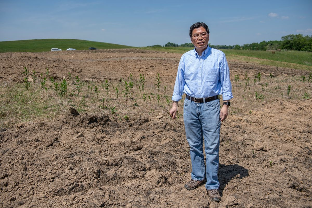 Jingxin Wang stands on a brown field where trees are being grown for a biomass research project.