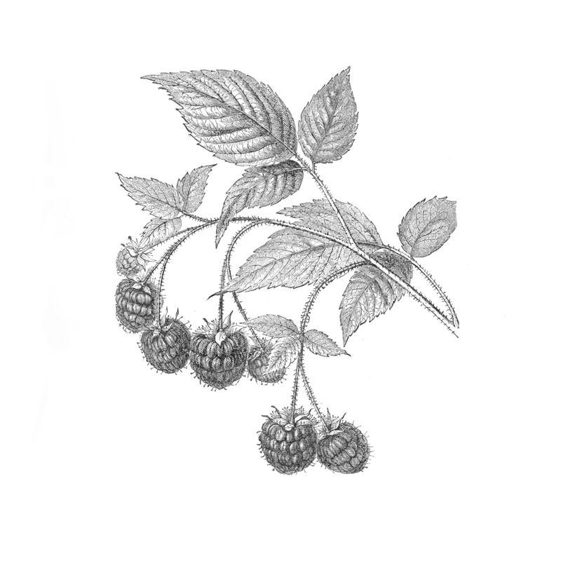 Photo from gardening book