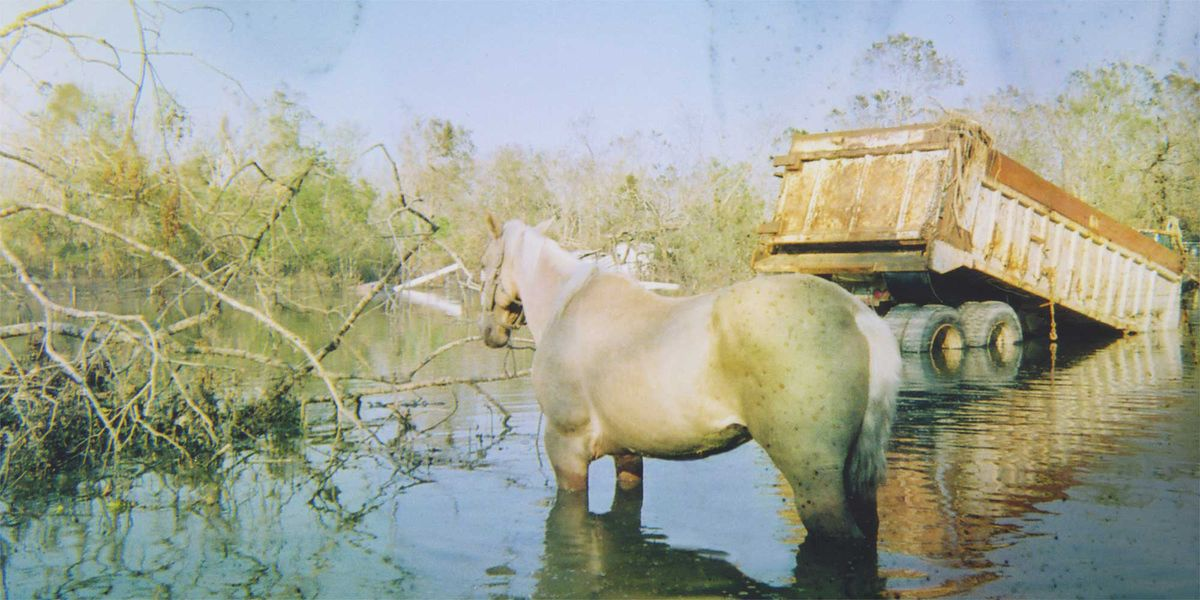 A horse in flood wreckage.
