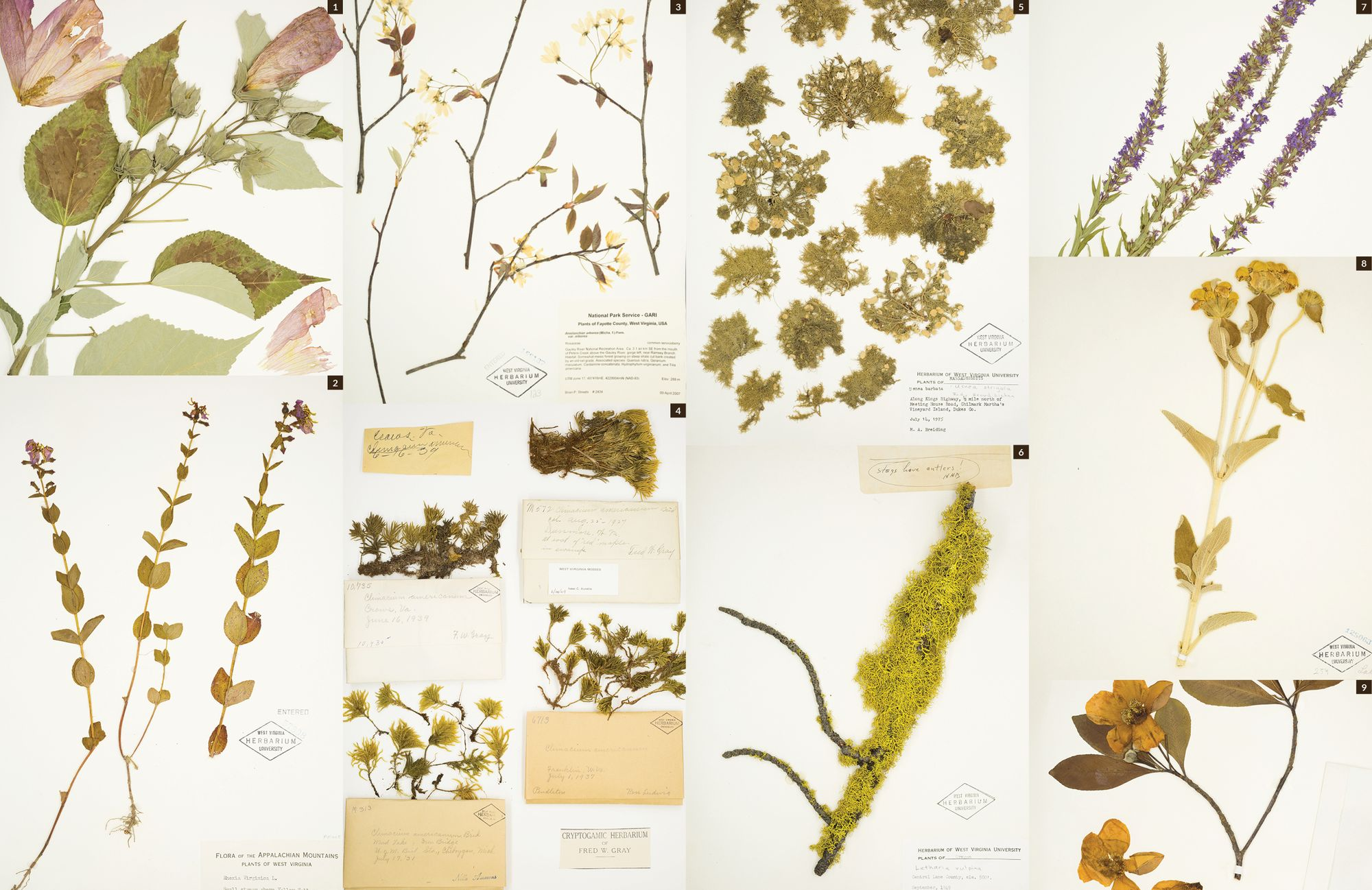Plants in the herbarium collection.