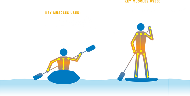Diagram showing which muscles you use while paddling.
