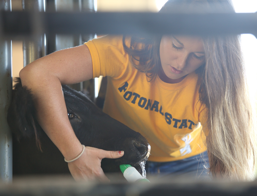 A Potomac State College student works with an animal.