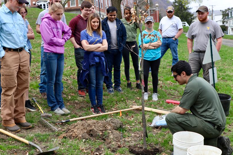 WVU Potomac State College Ag Club participating in a tree digging demonstration on campus
