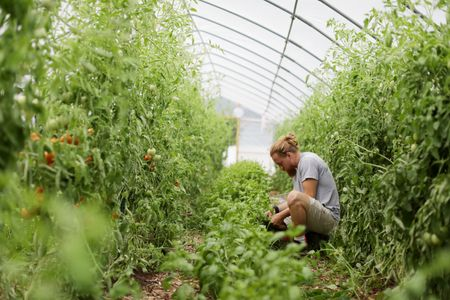 A man picks vegetables at Sprouting Farms