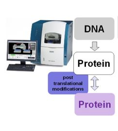 Tool for bioanalytics with capillary and micro electrophoresis and flow chart showing DNA to Protein to other Protein using post translational modifications